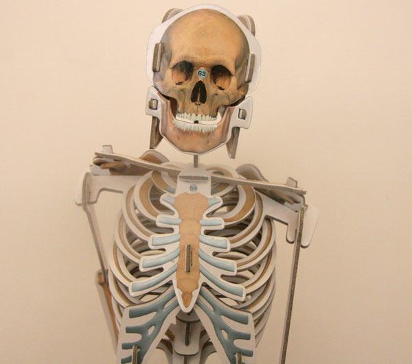 squelette-nathan-fini