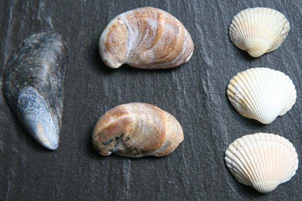 coquillage-compter
