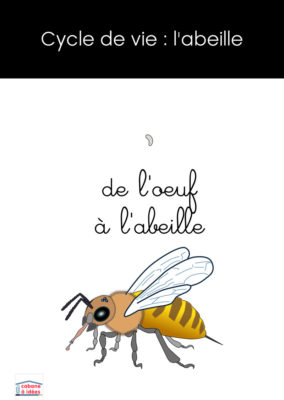 couv-cycle-abeille-1